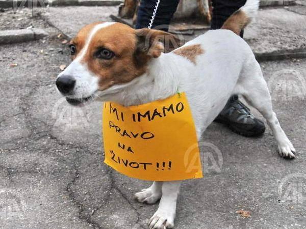 Protest Udruženja za zaštitu životinja