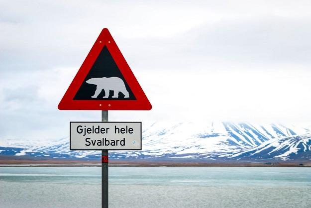 Norveška planira izbeglice da udomi na Svalbard, arktički arhipelag na koji ima više polarnih medveda nego ljudi