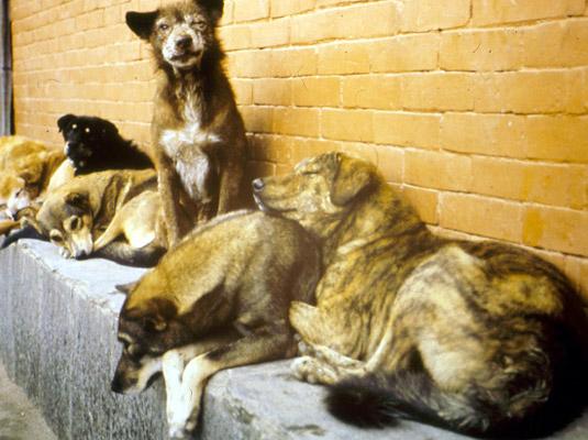 Pančevo: neustavna Odluka o držanju domaćih životinja