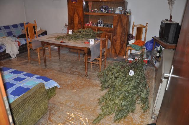 Doljevac: otkriveni proizvođači marihuane