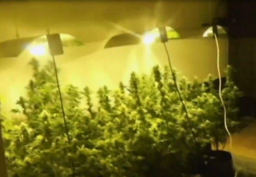 Zlatibor: otkrivena laborotorija za proizvodnju marihuane