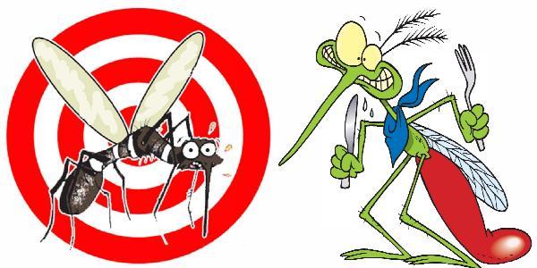 Kako protiv komaraca?