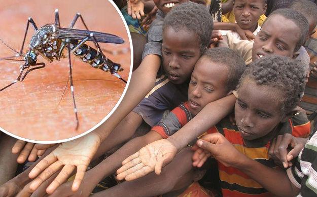 Najava: novi afrički virus preti Evropi