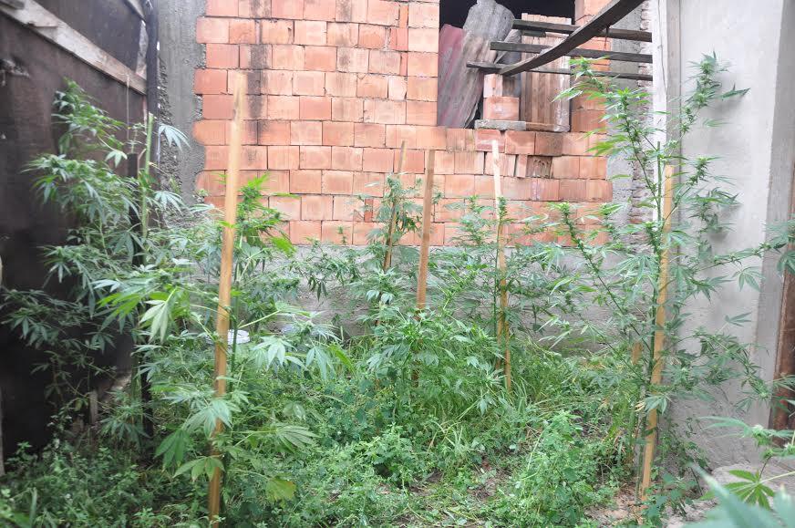 U selu kod Jagodone uzgajao konoplje