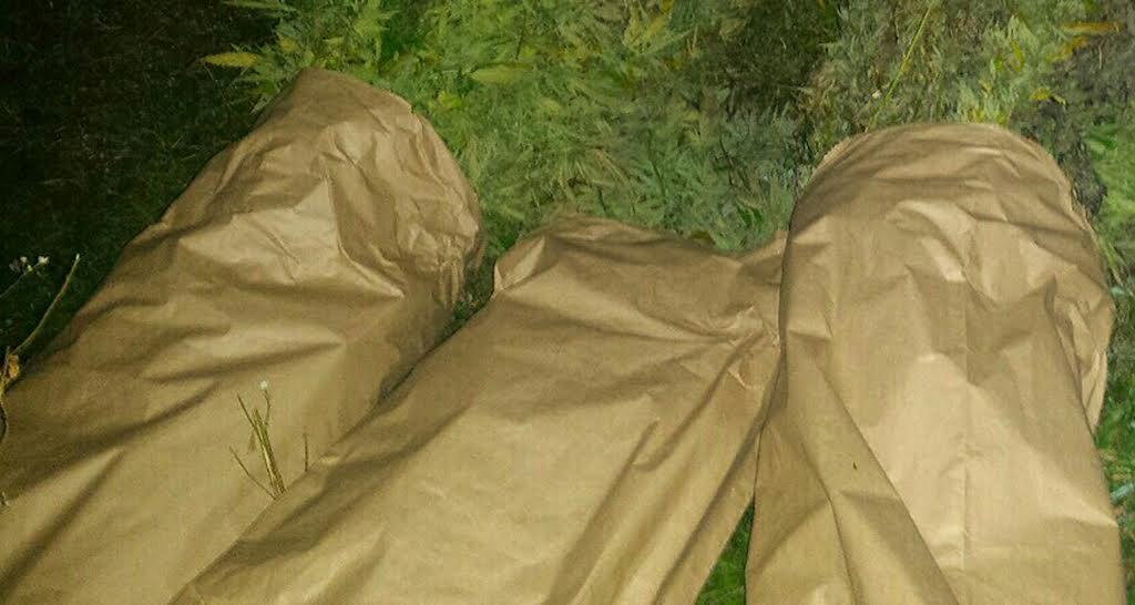 Arilje:Otkriveni proizvođači marihuane