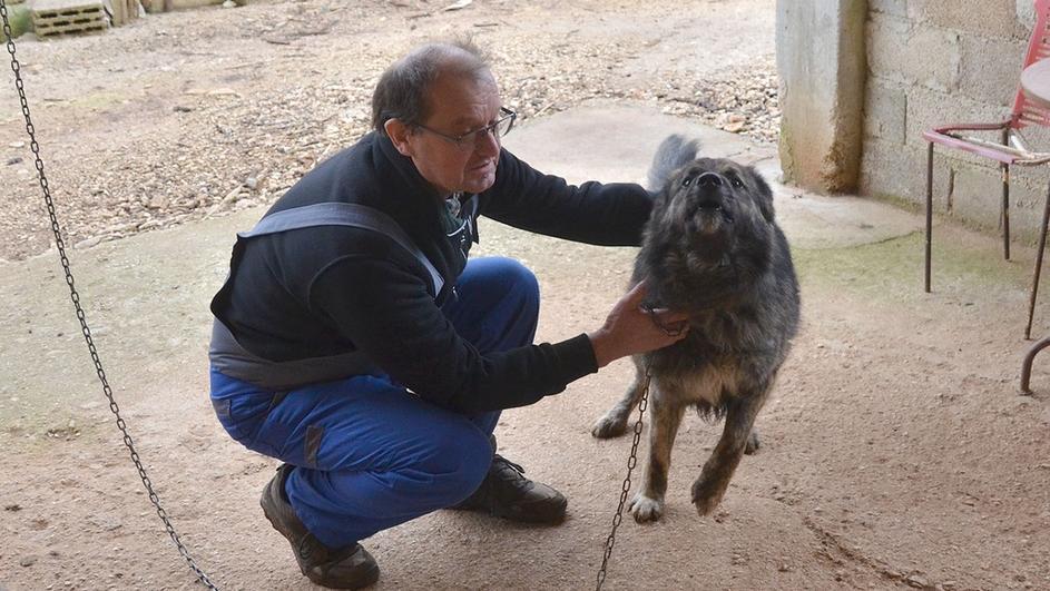 Presuda Opštinskog suda u Puli: pas Medo krv je zato što laje!