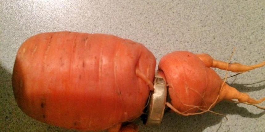 Venčana šargarepa