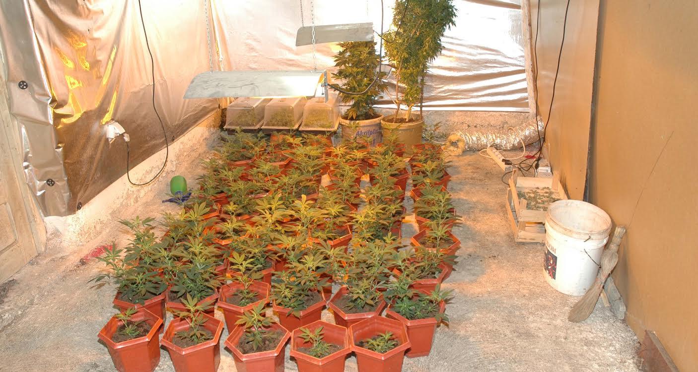 U Prokuplju otkriverna laborotorija marihuane