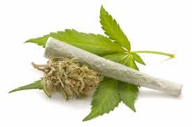 Australija: prijavila dilera zbog poskupljenja marihuane!