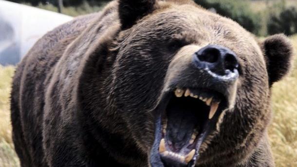 Bugarska: presuđena odšteta zbog napada medveda!