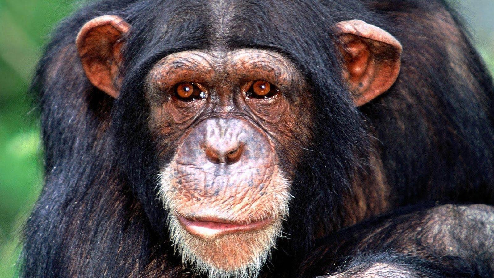 LSV: Sramno revidiranje Darvinove teorije evolucije