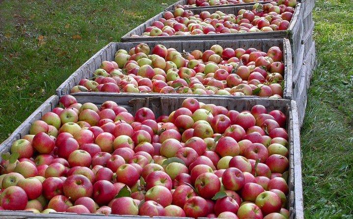 Uvozno voće prodavao Rusima kao srpsko