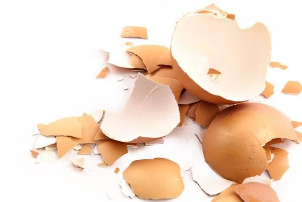 Jaja – savršena namirnica iz prirode!