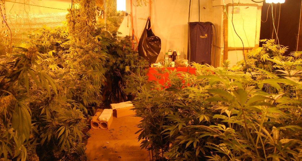 Bogatić: otkrivene dve laborotorije marihuane