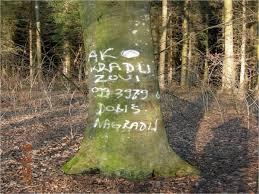SKUPŠTINA SRBIJE: Godišnje se u Srbiji ukrade 20 miliona kubnih metara šume