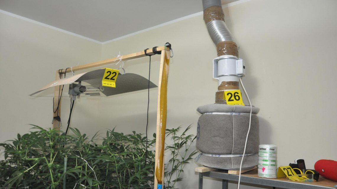 SMEDEREVO: Otkrivena laborotorija marihuane