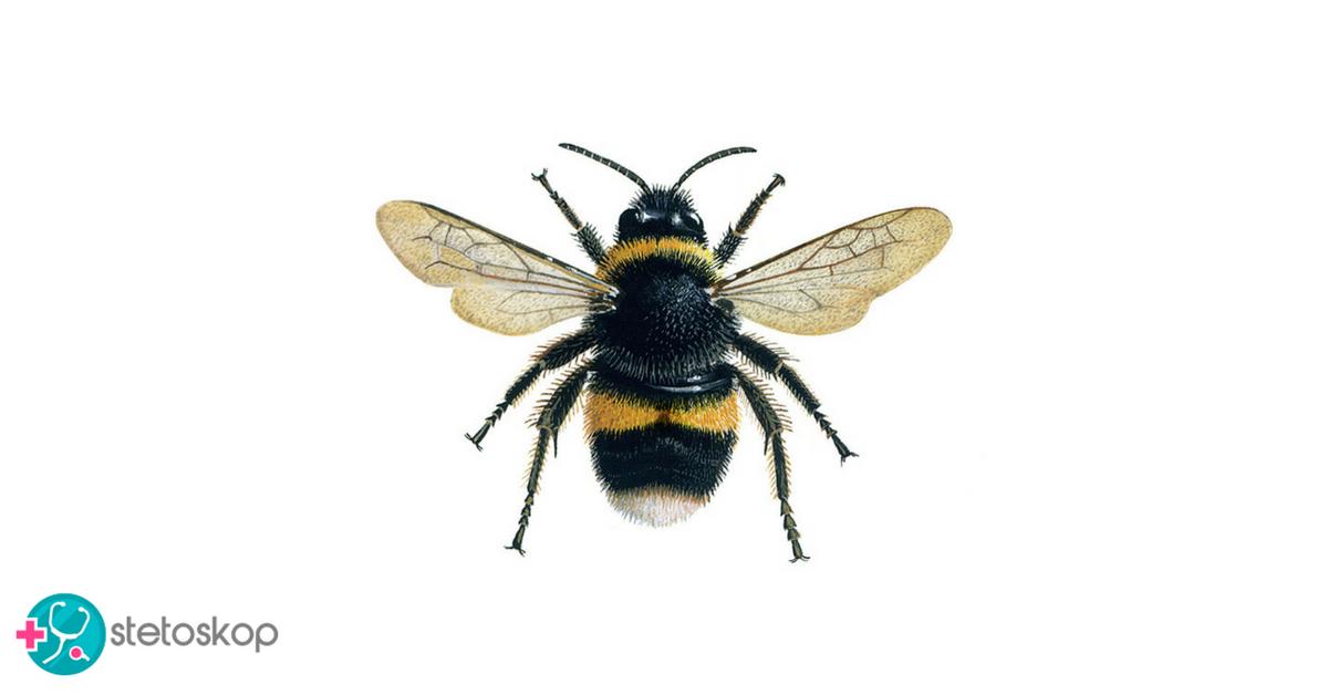 OPOMENA: Ako pčele nestanu – nestaće i čovečanstvo!