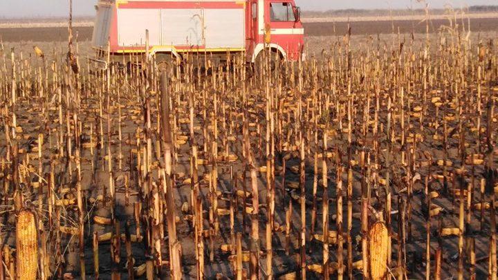 LSV: Neobrani kukuruz gori – nadležni ćute
