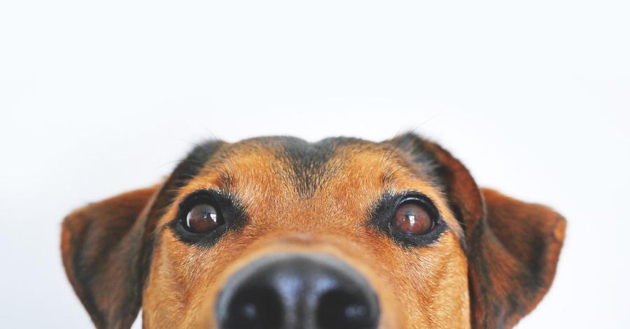 KORONAVIRUS: Vlast dozvolila – psi mogu da pišaju!