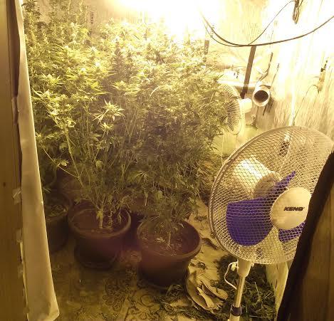Sombor: u napuštenoj kući laborotorija za uzgoj marihuane